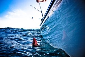 GulfWild IMG_3023